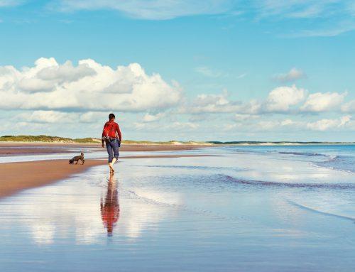 Explore The Northumberland Coastline